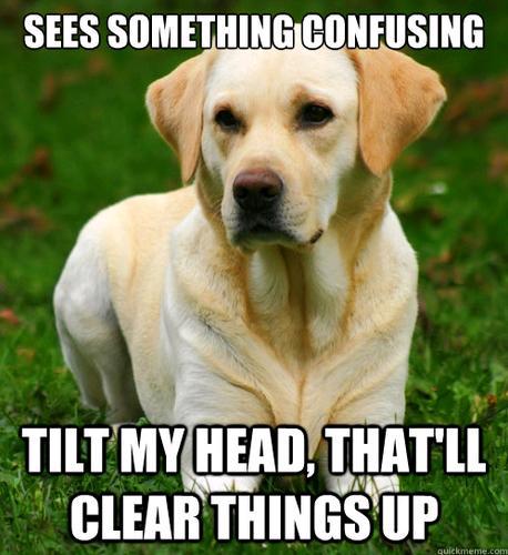 dog logic 1