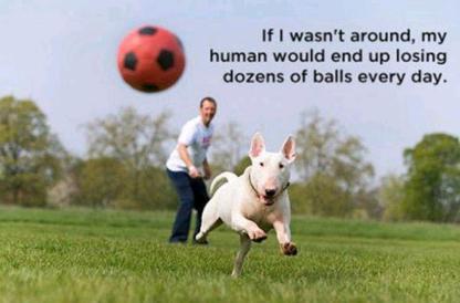 dog saver of balls